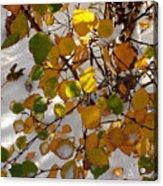 October Snow Acrylic Print