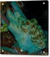 Octopus Yoga Acrylic Print