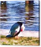 Odd Looking Duck In Swansboro Nc Acrylic Print