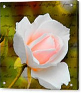 Ode To A Rose Acrylic Print