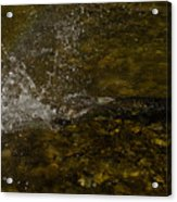 Of Fishes And Rainbows - Wild Salmon Run In The Creek Acrylic Print