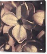 Of Lilac Tales She Tells Acrylic Print