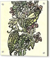 Of Sweet Vanilla Acrylic Print