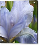 Office Art Blue Iris Flower Floral Giclee Baslee Troutman Acrylic Print