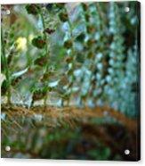 Office Art Fern Green Forest Ferns Giclee Prints Baslee Troutman Acrylic Print