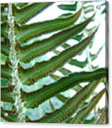 Office Art Ferns Green Forest Fern Giclee Prints Baslee Troutman Acrylic Print