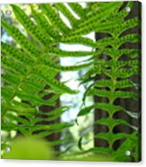 Office Art Ferns Redwood Forest Fern Giclee Prints Baslee Troutman Acrylic Print
