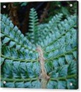 Office Art Forest Ferns Green Fern Giclee Prints Baslee Troutman Acrylic Print