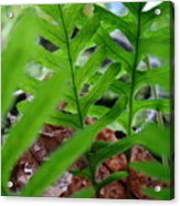 Office Art Forest Ferns Green Fern Giclee Prints Baslee Troutman Acrylic Print