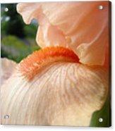 Office Art Irises Orange Iris Flowers 9 Giclee Prints Corporate Art Baslee Troutman Acrylic Print