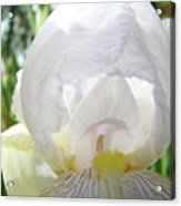 Office Art Irises White Iris Flower Floral Giclee Prints Baslee Troutman Acrylic Print
