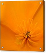 Office Art Poppies Orange Poppy Flowers Giclee Prints Baslee Troutman Acrylic Print