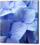 Office Art Prints Blue Hydrangea Flowers Giclee Baslee Troutman Acrylic Print