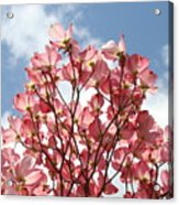 Office Art Prints Blue Sky Pink Dogwood Flowering 7 Giclee Prints Baslee Troutman Acrylic Print