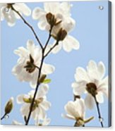 Office Art Prints Blue Sky White Magnolia Flowers 38 Giclee Prints Baslee Troutman Acrylic Print