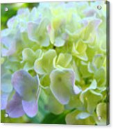 Office Art Prints Hydrangea Flowers Botanicals Giclee Baslee Troutman Acrylic Print