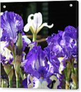 Office Art Prints Iris Flower Botanical Landscape 30 Giclee Prints Baslee Troutman Acrylic Print