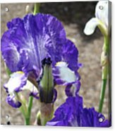 Office Art Prints Irises Flowers 46 Iris Flower Giclee Prints Baslee Troutman Acrylic Print