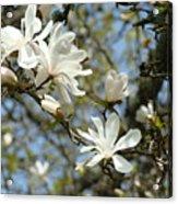 Office Art Prints Magnolia Tree Flowers Landscape 15 Giclee Prints Baslee Troutman Acrylic Print