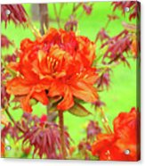 Office Art Prints Orange Azalea Flowers Landscape 13 Giclee Prints Baslee Troutman Acrylic Print