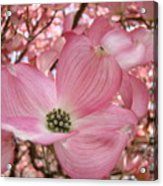 Office Art Prints Pink Flowering Dogwood Tree 1 Giclee Prints Baslee Troutman Acrylic Print