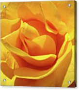 Office Art Prints Roses Orange Yellow Rose Flower 1 Giclee Prints Baslee Troutman Acrylic Print