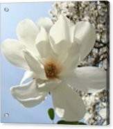 Office Art Prints White Magnolia Flower 66 Blue Sky Giclee Prints Baslee Troutman Acrylic Print