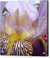 Office Art Purple Iris Flower Floral Irises Giclee Baslee Troutman Acrylic Print