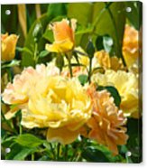 Office Art Rose Garden Giclee Prints Roses Baslee Troutman Acrylic Print