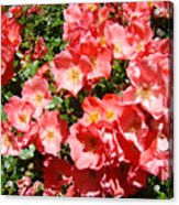 Office Art Rose Garden Landscape Art Pink Roses Giclee Baslee Troutman Acrylic Print