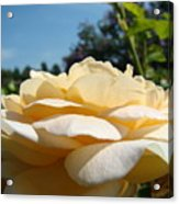 Office Art Rose Landscape Peach Roses Flowers Giclee Baslee Troutman Acrylic Print