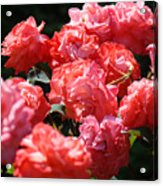 Office Art Roses Pink Rose Flowers Floral Garden Acrylic Print