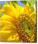 Office Art Sunflowers Giclee Art Prints Sun Flowers Baslee Troutman Acrylic Print