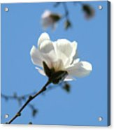 Office Artwork Prints Blue Sky White Magnolia Flower Acrylic Print