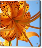 Office Artwork Tiger Lily Flowers Art Prints Baslee Troutman Acrylic Print