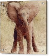 Oh Baby What Big Ears You Have Acrylic Print