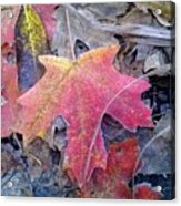 Autumn Color Acrylic Print