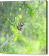 Oh The Webs We Weave Acrylic Print