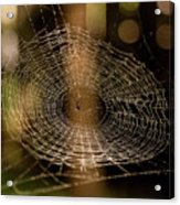 Oh What Tangled Webs.... Acrylic Print