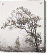 Ohia Lehua Tree Acrylic Print