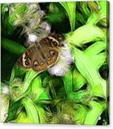 Ohio Buckeye Acrylic Print