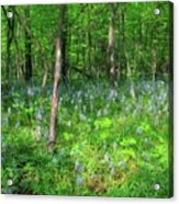 Ohio Wildflowers In Spring Acrylic Print