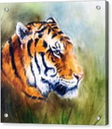 Oil Painting Of A Bright Mighty Tiger Head On A Soft Toned Abstr Acrylic Print