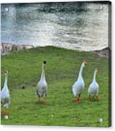 Ok   Too Close Acrylic Print