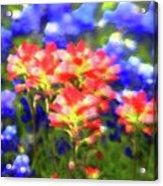 Oklahoma Wildflowers Acrylic Print