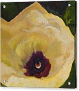 Okra Flower Acrylic Print