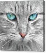 Ol' Blue Eyes Acrylic Print