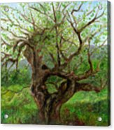 Old Apple Tree Acrylic Print