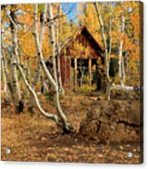 Old Cabin In The Aspens Acrylic Print