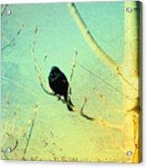 Old Crow Medicine Show Acrylic Print